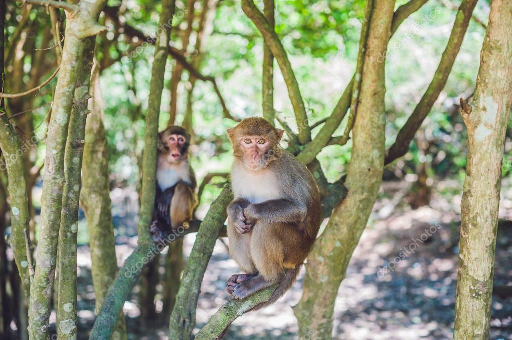 Macaque monkeys sitting on the tree