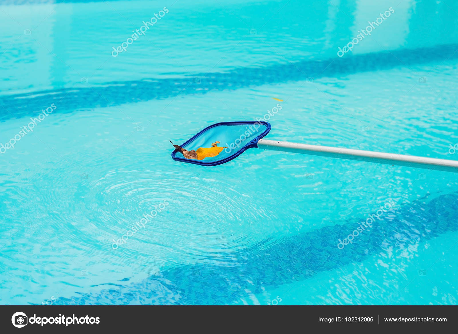 Cleaning Swimming Pool Cleaning Net Morning — Stock Photo ...