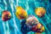 Fotografie Tropické ryby s korály a řasy v modré vodě. Krásné pozadí podmořského světa