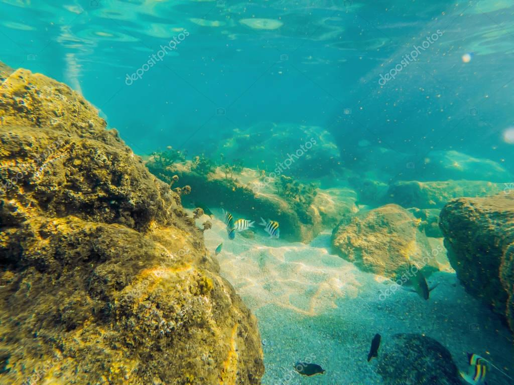 Tropical fish and corals in the sea under water.