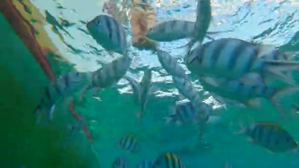 Underwater shot - woman feeding tropical fishes. Holidays in tropics concept