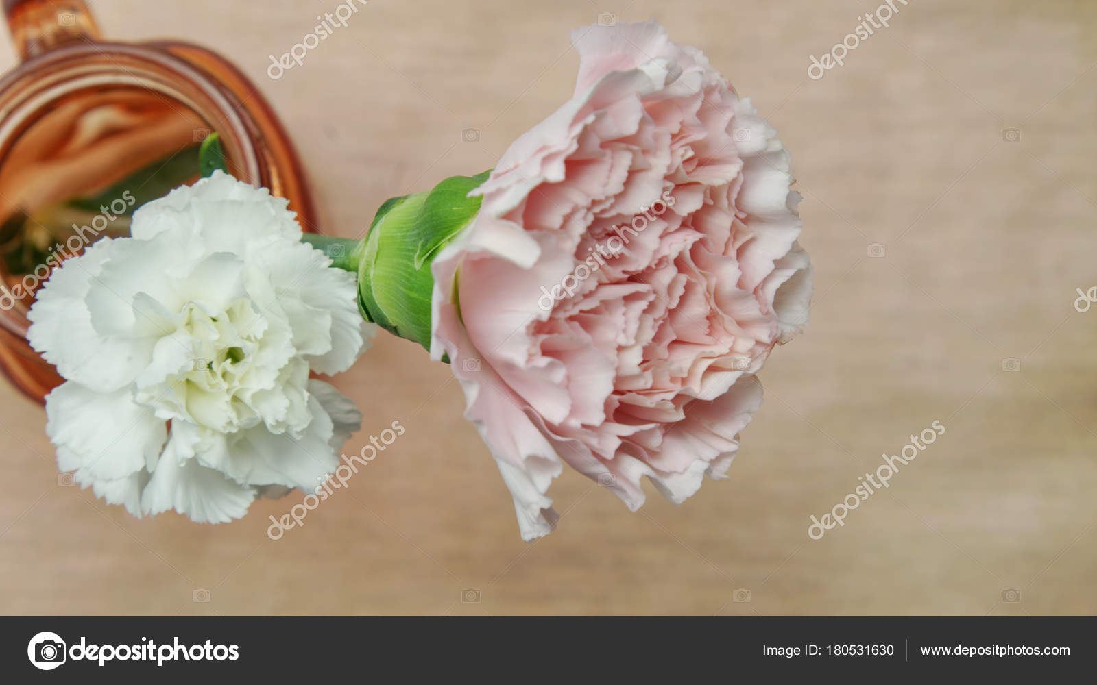 Pink White Carnation Flowers Grey Background — Stock Photo ...
