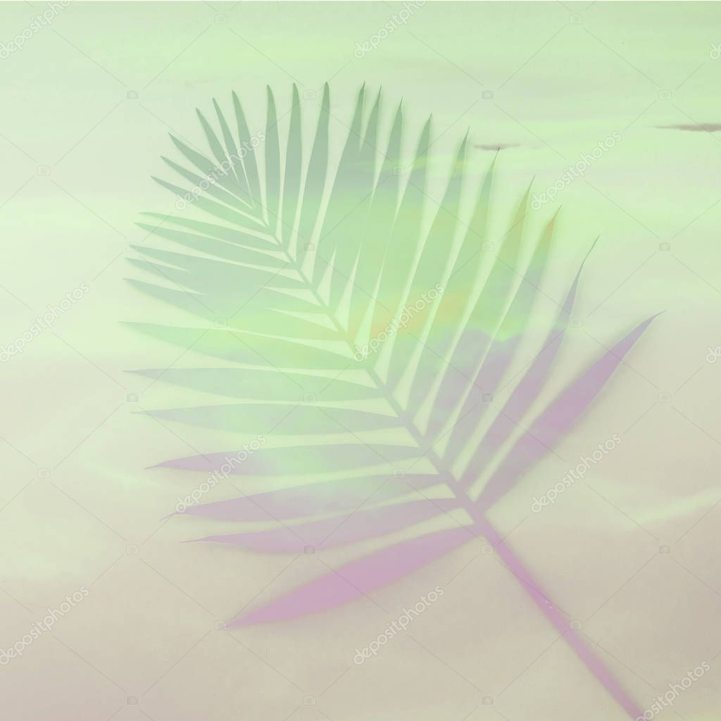 palm leaf minimal and flat lay