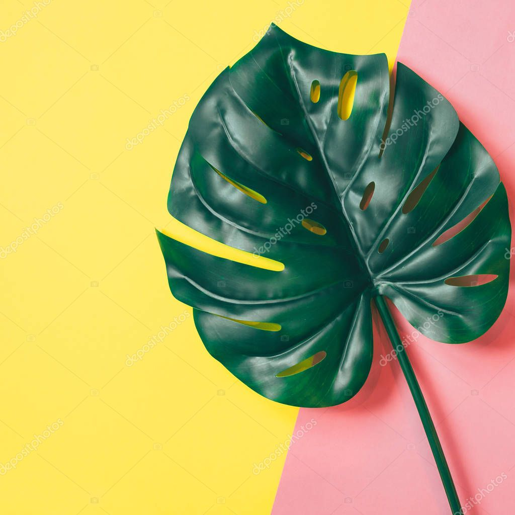Tropical palm leaf on pink and yellow background. Flat lay minimal