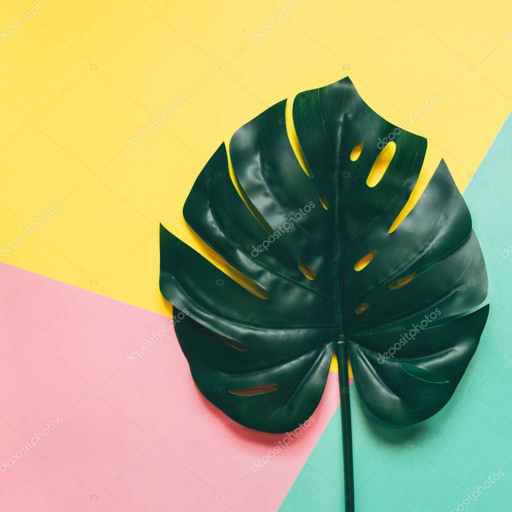 One Creative tropical green leaf layout on colorful background. Nature concept.