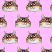 Fotografie Funny cats  heads on pink background. Fashion art collage pattern.