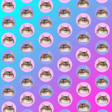 heads of cats in circles on gradient background