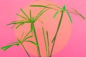 Photo palm tree on a rich bright pink background with circle in the middle for text. minimal tropical trend concept