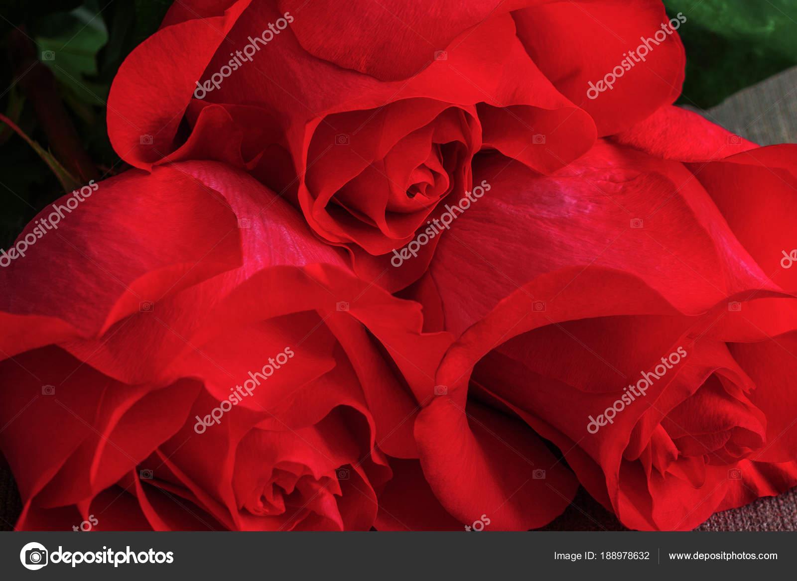 Mazzo Di Primo Piano Dal Vivo Rosso O Scarlet Rose Sfondo Floreale