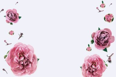 Red peonies on the white background for your web sait. Luxury bouque background.
