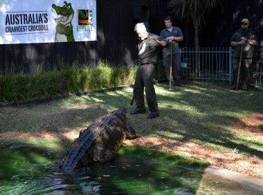 show of Australia's crankiest crocodile Elvis