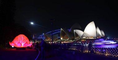 Waratah installation during Vivid Sydney