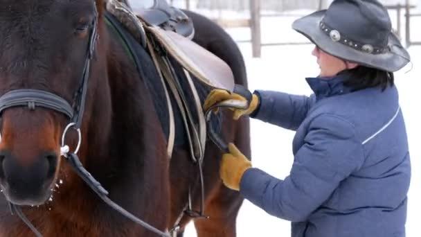 Jezdec využití a upevnění saddne na hnědé koně v otevřené výběhu v zimě, příprava na závody
