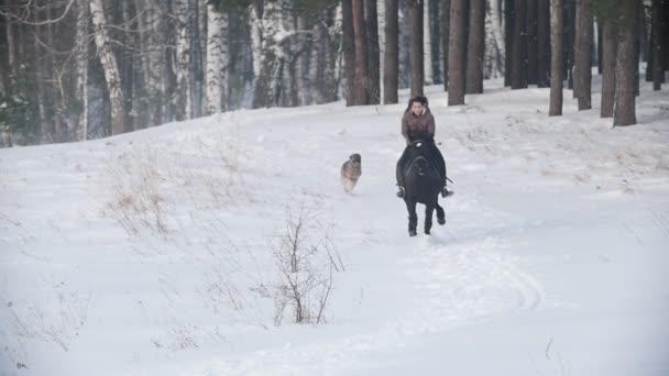 Dlouhovlasého ženské jezdec divoké a rychle na koni černý kůň sněhem, pes běží nedaleké, pomalý pohyb