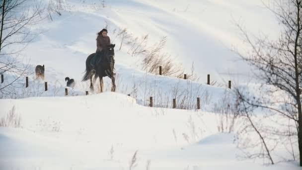 Krásná dlouhosrstá ženy jezdec na černým koni ve sněhu na cestě psů, kteří nedaleko