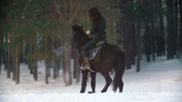 Beautiful longhaired woman riding a black horse through the snow in the forest, independent stallion prancing and standing up on its hind legs