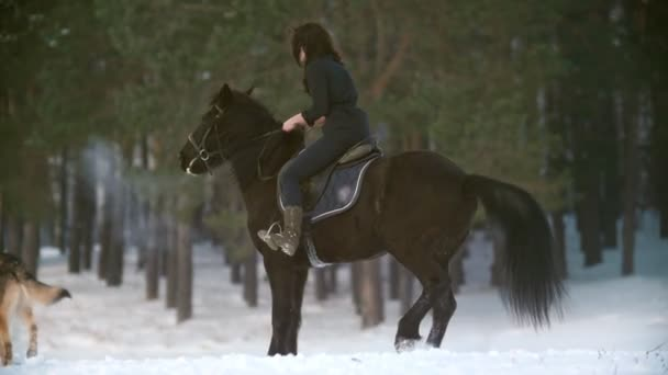 Professional beautiful longhaired woman riding a black horse through the deep snow in the forest, independent stallion standing up on its hind legs