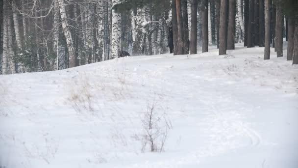 Dlouhovlasého divoké ženy jezdec na černém koni sněhem, pes běží nedaleké