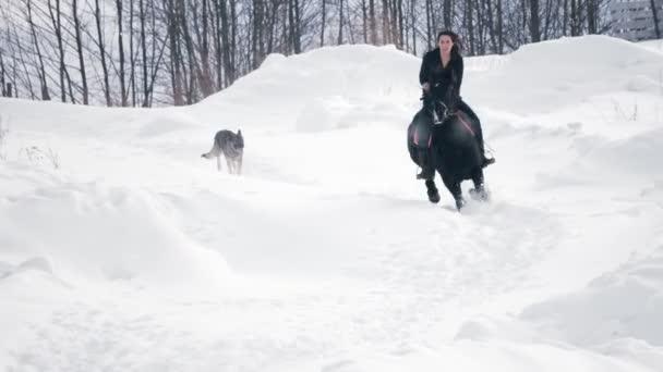 Atraktivní dlouhosrstá ženy jezdec na černém koni závějemi v poli zimní psů, kteří nedaleko