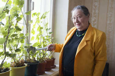 Old lady in the yellow jacket at the window watering houseplant