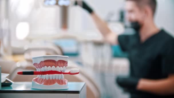 Plastic model of human jaws with a toothbrush - man dentist preparing everything for the checking the mouth of a small boy