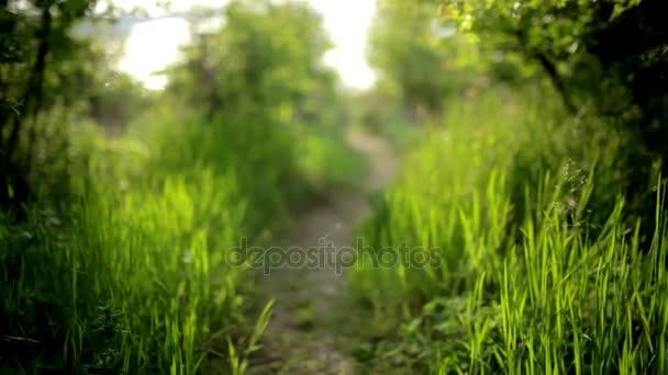 Světlé glade s divoce rostoucí květiny, trávy a Rosa