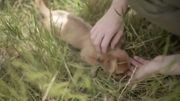 mladá žena hlazení malé štěně čivava psa venku v přírodě