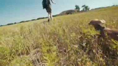 zár-megjelöl vicces kutya-chihuahua üldözi a tulajdonos, a mező a nap lassú mozgás