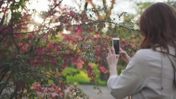 Young attractive red-haired woman taking photos of spring flowers of cherry or sakura blossoms on smartphone at sunset in park