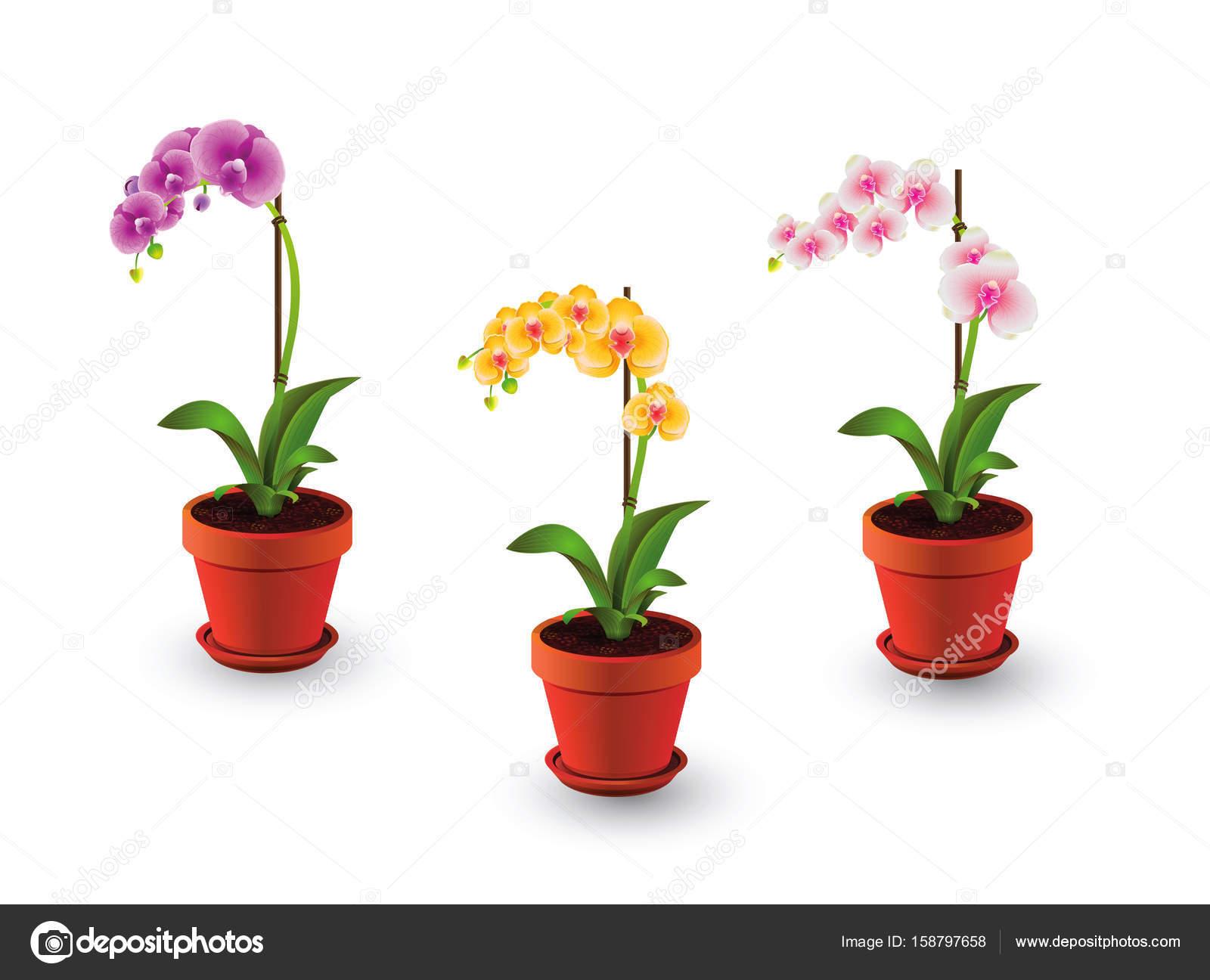 tsvetok-orhidei-v-gorshke