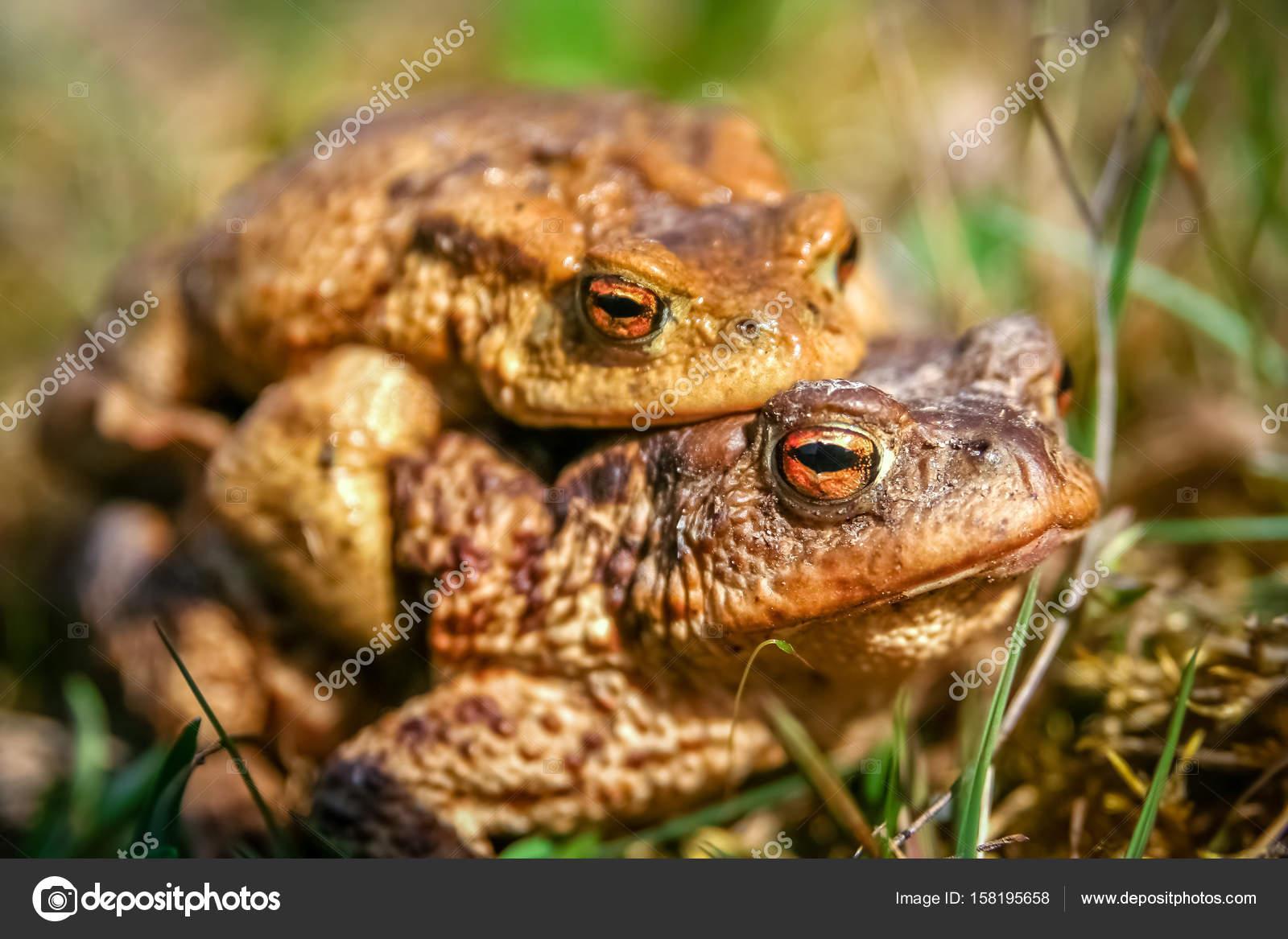 Секс с лягушками