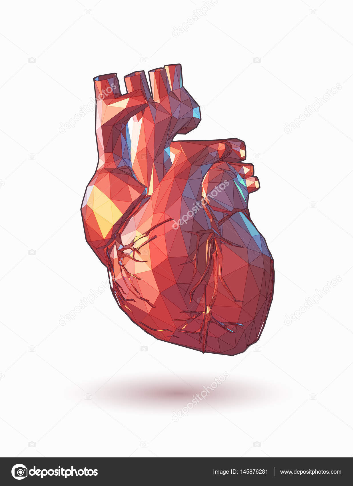 Low poly human heart illustration stock vector jolygon 145876281 colorful low poly human heart graphic illustration on white background vector by jolygon ccuart Choice Image