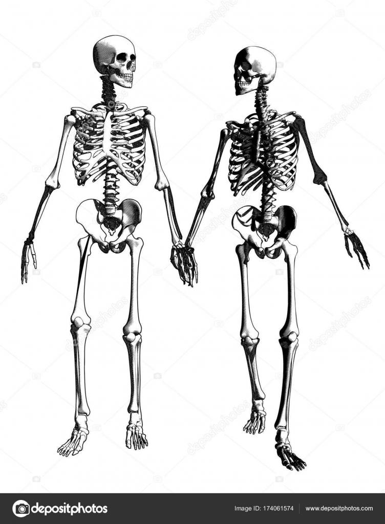 Un par de dibujo ilustración esqueleto — Vector de stock © Jolygon ...