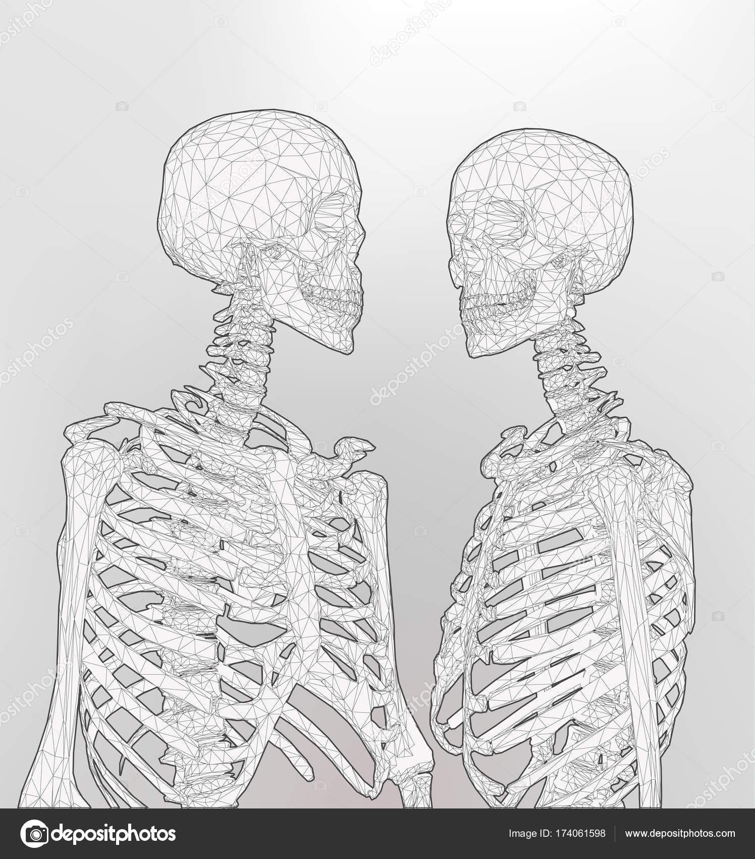 Un par de esqueleto poligonal en color monocromo en blanco Bg ...