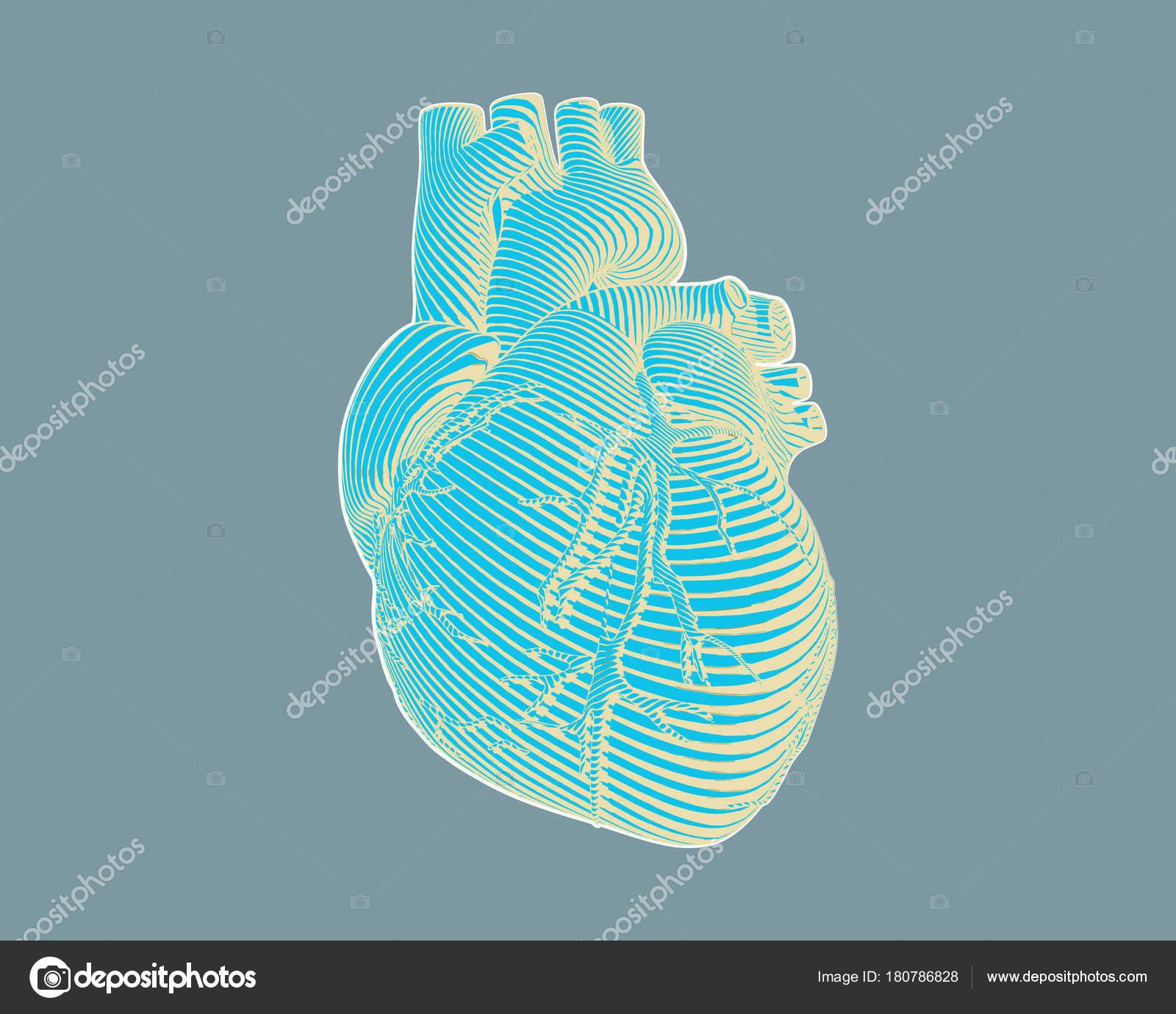 Corazón grabado estilizado dibujo en gris Bg — Vector de stock ...