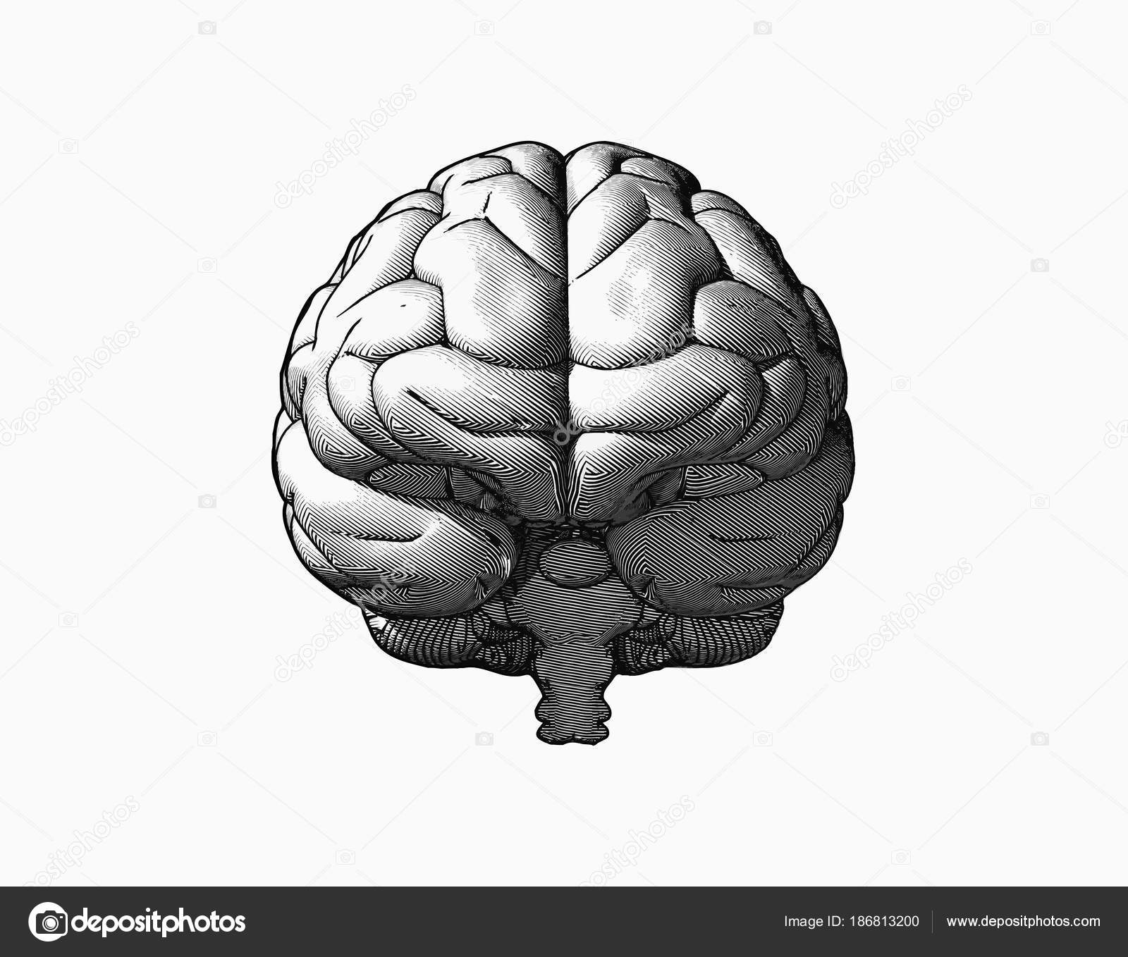 Drawings: brain simple | Brain drawing illustration in front
