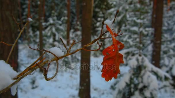 red oak leaf on a branch in winter forest