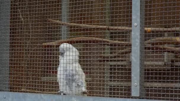 papoušci ve hře klec