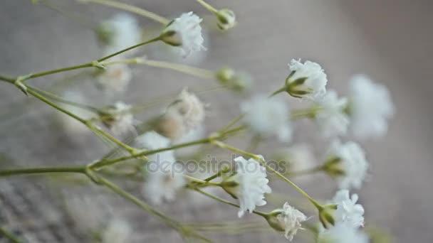 malé bílé květy na plátně