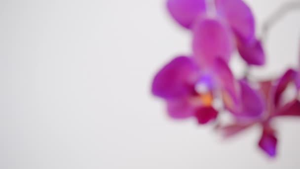 Phalaenopsis orchidea virágok elszigetelt fehér background