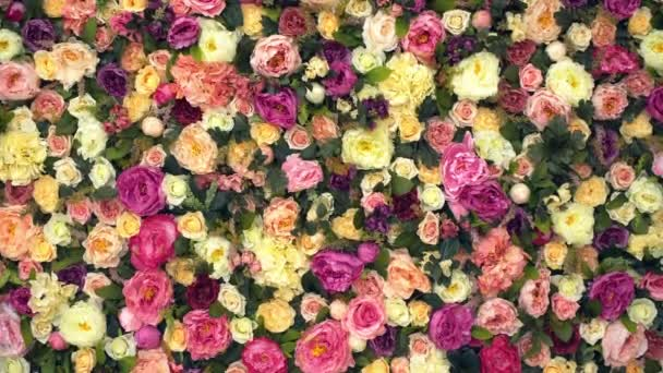 Background: red yellow and pink roses