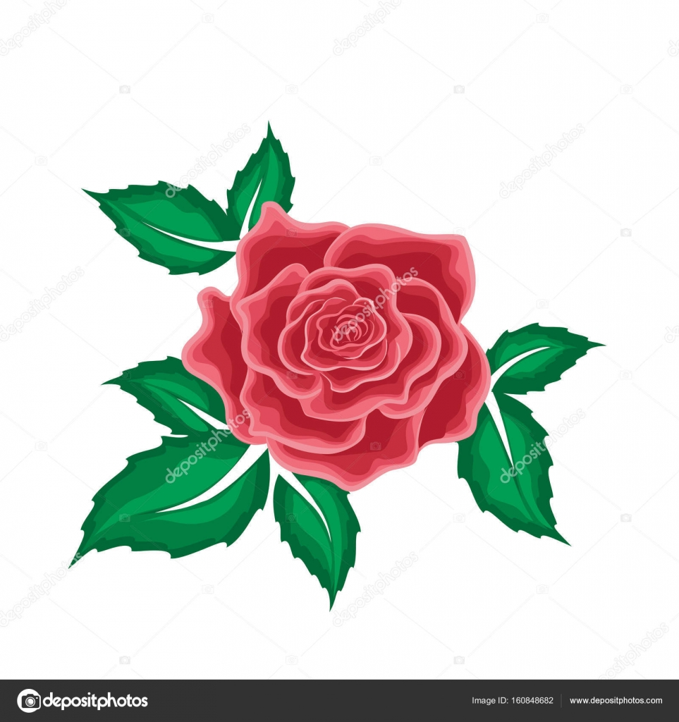 Animado Rosas Rojas Dibujo Rosa Roja En Las Hojas De Estilo De
