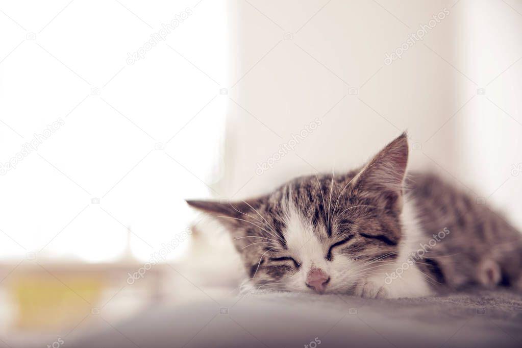 Little kitten sleeps on a coverlet. Small cat sleeps sweetly as