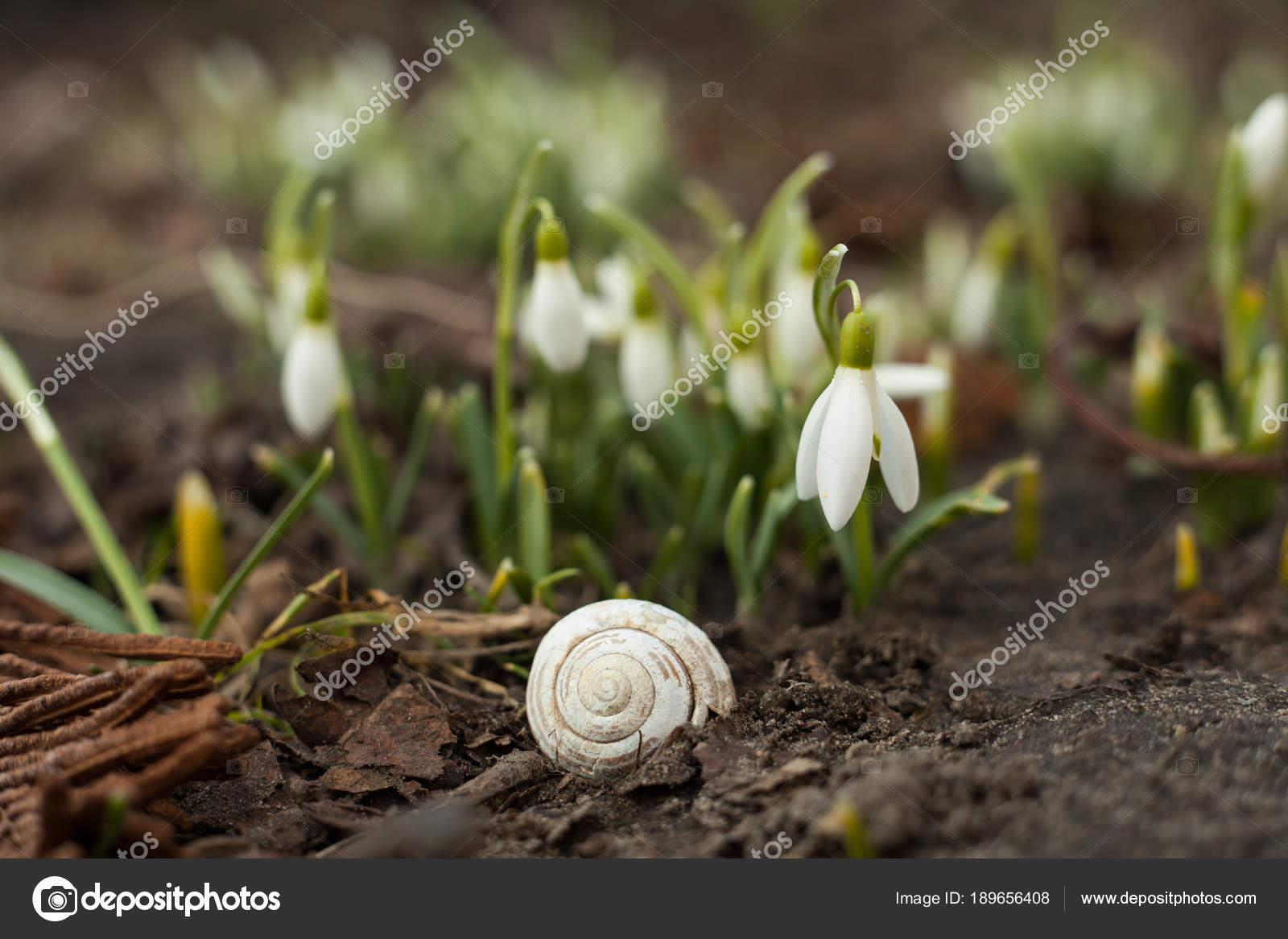 White Snowdrop Bell Empty Snail Shell Flower Shape Small Bell