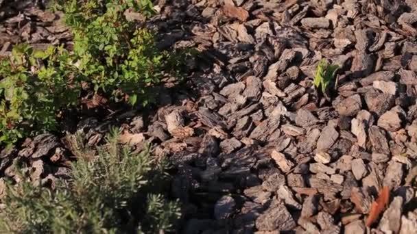 Zahradničení. Horní pohled na kůru stromu na zkusné ploše