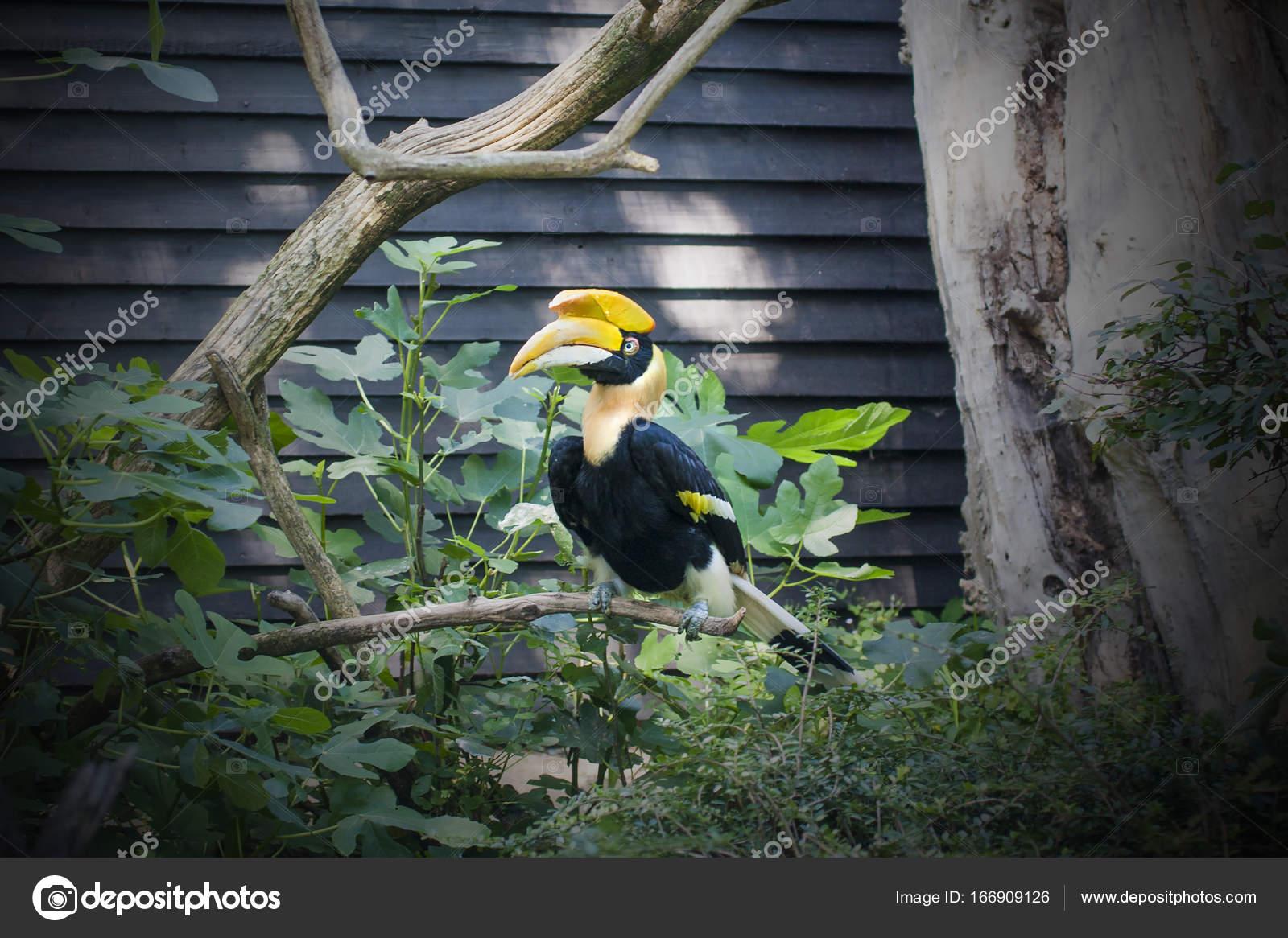 Μεγάλο πουλί σε σφιχτό μουνιά