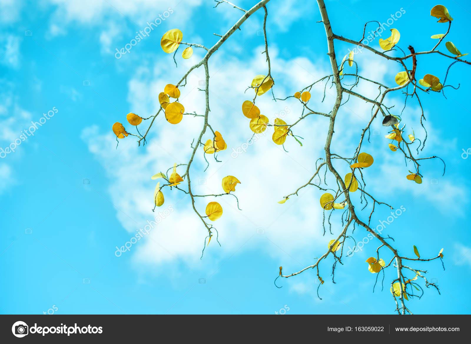 Une Branche D Un Arbre Tropical A Feuilles Tombantes Photographie