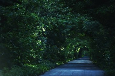 The road among the trees creating an arch. Green tunnel made of tree branches.