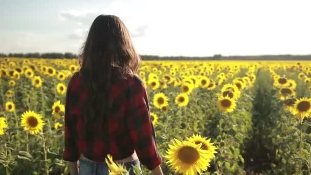 Beautiful lady walking in summer sunflower field