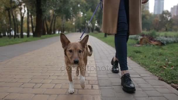 Roztomilé štěně s majitelem chůzi na podzim park